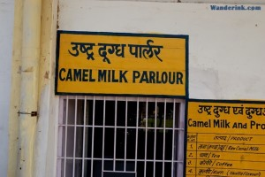 'Camel milk' sends shivers down some spines