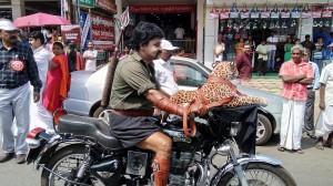 Two wheeled fantasy #Pulimurugan